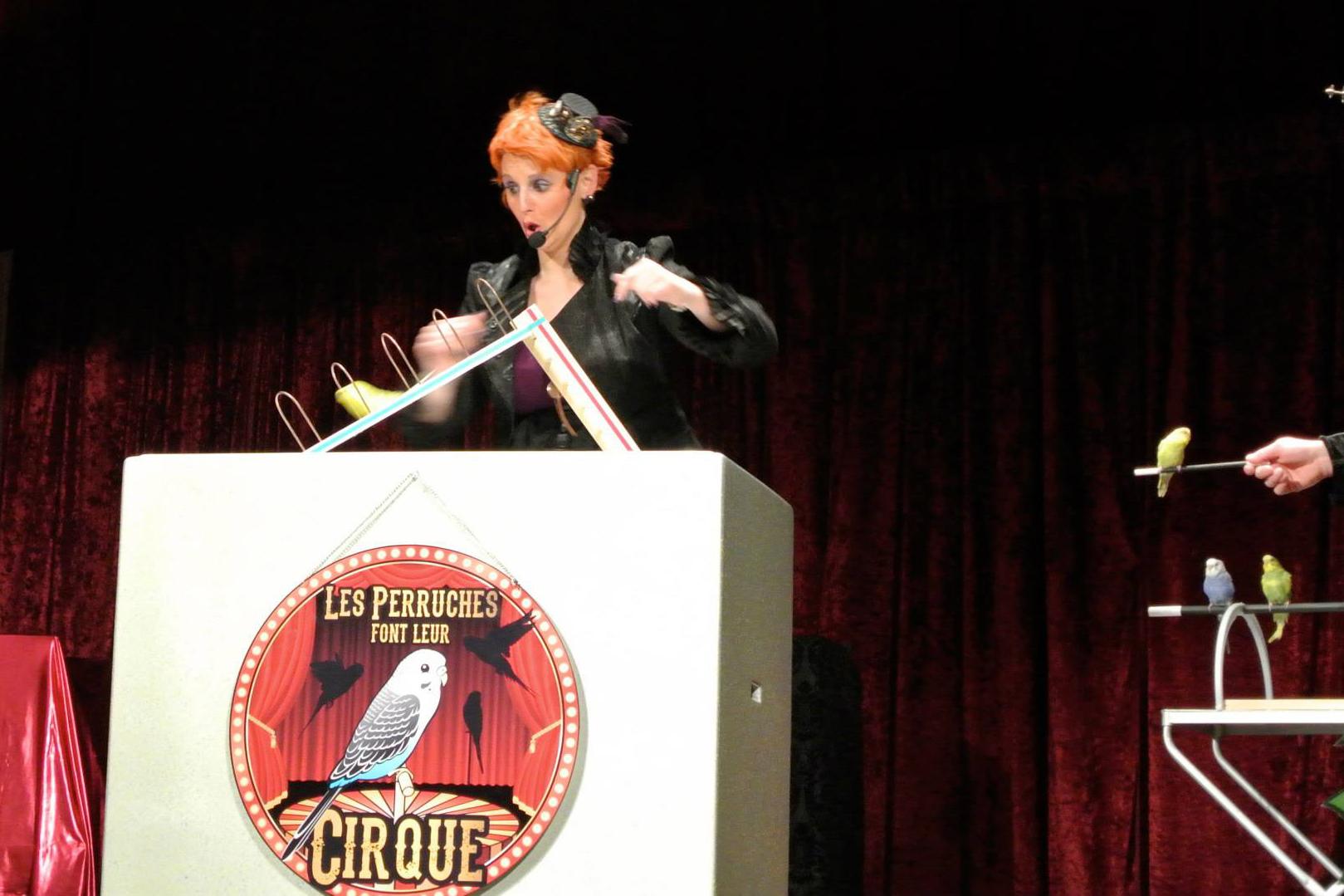 Perruches_cirque